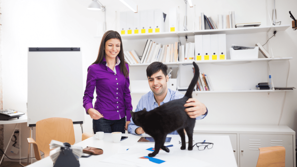2 people are playing with the cat in their office